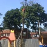 Спил деревьев, Ростов-на-Дону